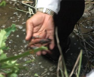 Cà Mau đẩy mạnh công tác quản lý chất lượng nguyên liệu thủy sản