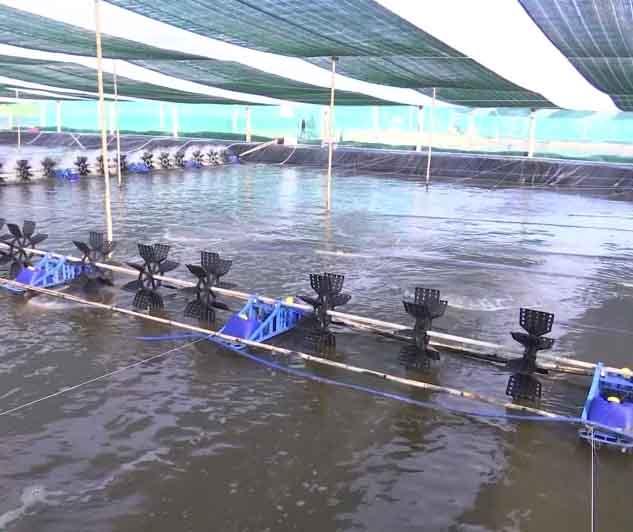 Khung lịch thời vụ nuôi trồng thủy sản năm 2018