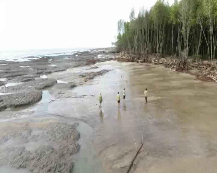 Sạt lở nghiêm trọng khu vực rừng phòng hộ biển Đông