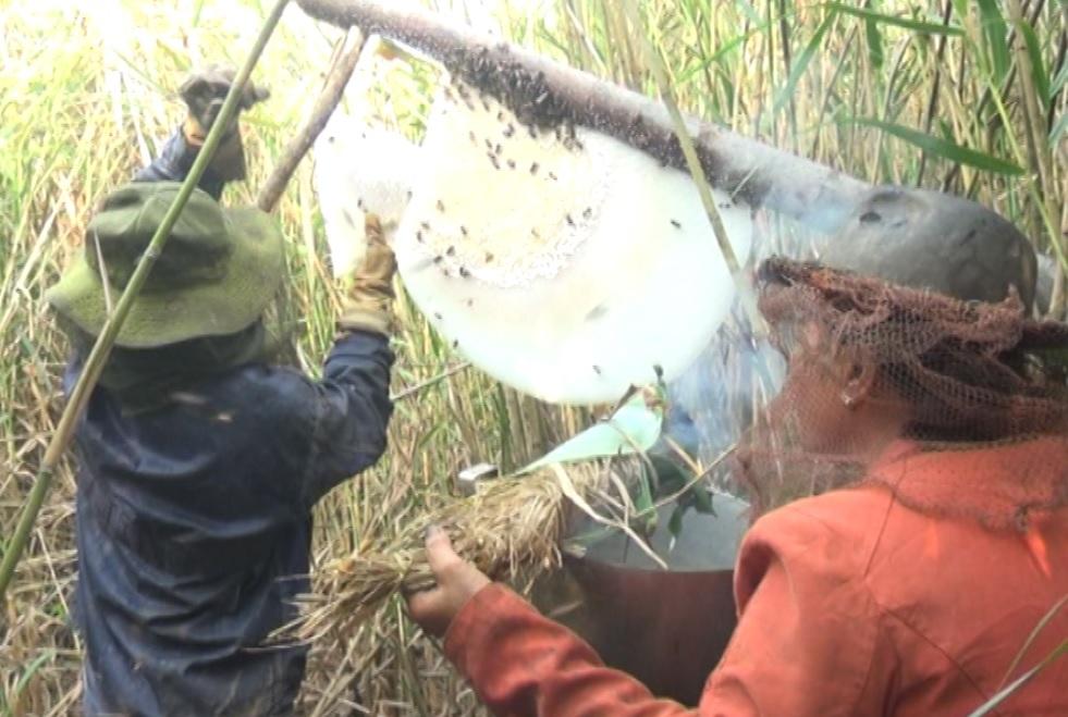 Huyện U Minh trúng mùa mật ong
