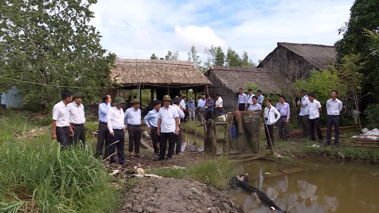 Chủ tịch UBND tỉnh Nguyễn Tiến Hải khảo sát mô hình nuôi tôm tại huyện Ngọc Hiển và Năm Căn