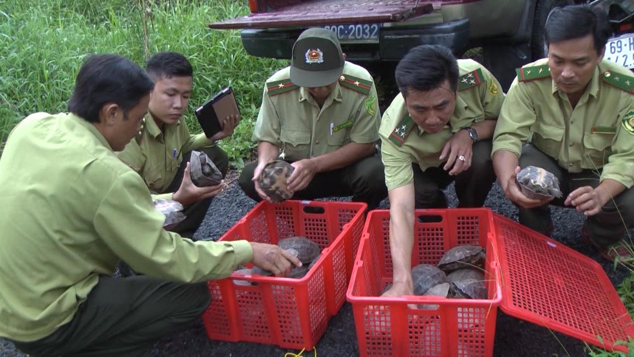Thả 33 cá thể rùa về rừng