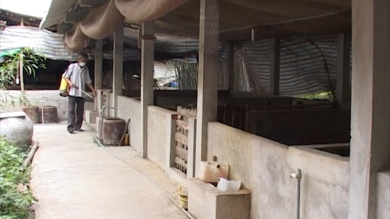 Phòng, chống dịch tả lợn châu Phi là nhiệm vụ trọng tâm, cấp bách