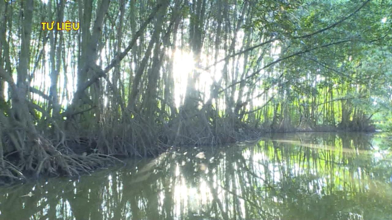 Đơn vị sở hữu vùng nuôi tôm sinh thái hữu cơ rừng ngập mặn